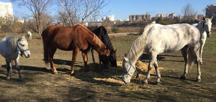 Скидка до 50% на прогулки на лошадях и обучение верховой езде от конного клуба «Айвенго»