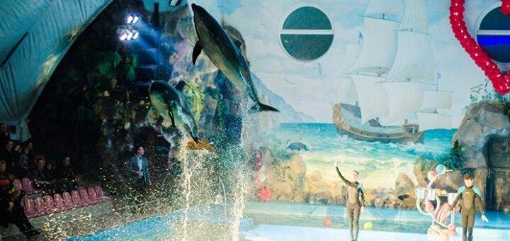 Скидка 50% на билеты на романтическое шоу «LOVE» в дельфинарии «НЕМО»